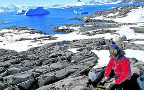 El calentamiento da alas a los mosquitos en la Antártida