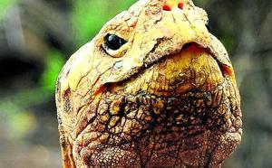 El semental de Galápagos se jubila