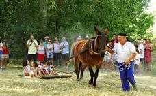Castrillo de Villavega: talleres para sustituir a la Fiesta de la Trilla