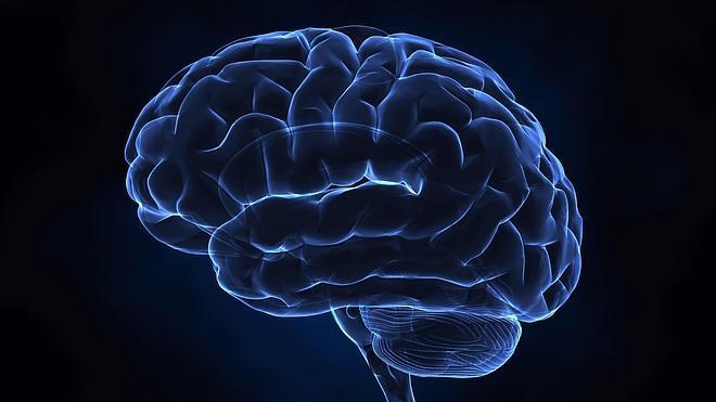 La proteína que permite generar nuevas neuronas