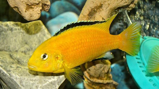 La mala memoria de los peces es un mito