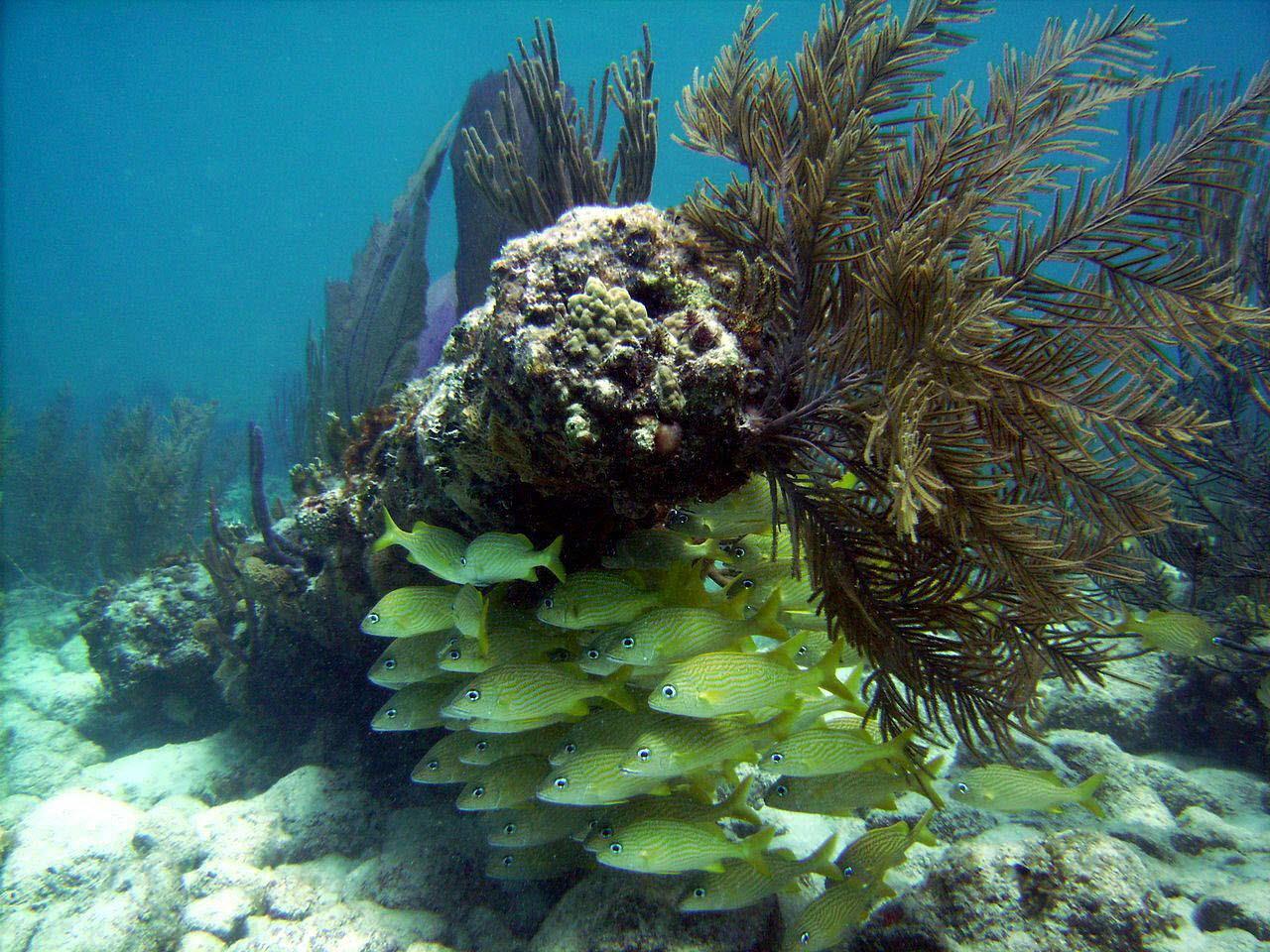 Los arrecifes del Caribe pueden desaparecer en 20 años