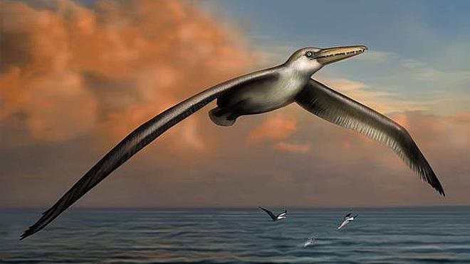 El pájaro más grande de todos los tiempos