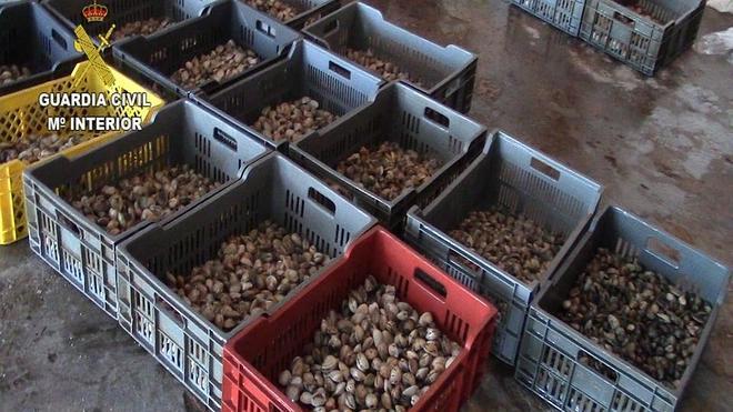 Cae una banda de comercio ilegal de moluscos en La Coruña