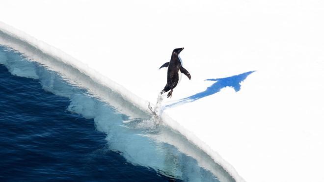 Llegan a un acuerdo para crear la mayor reserva marítima del mundo en la Antártida
