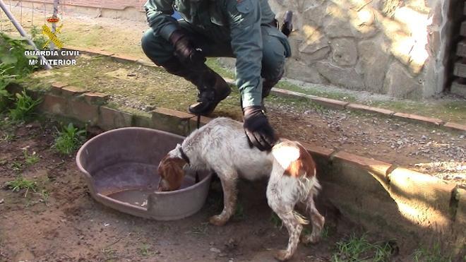 La Guardia Civil rescata a medio centenar de animales de una perrera ilegal en Chiclana