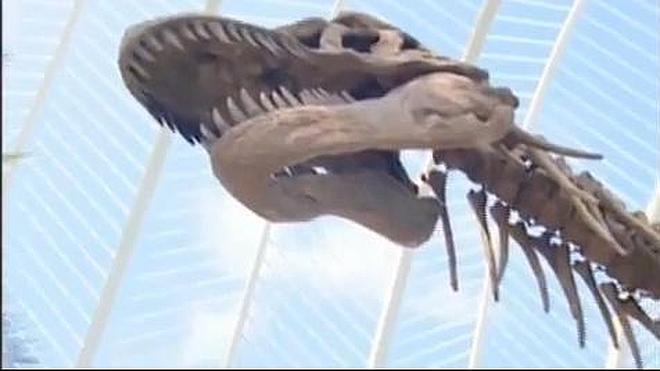 Los dinosaurios no eran de sangre caliente ni fría