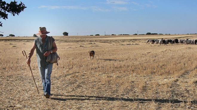 La crisis económica contribuye a frenar la desaparición del oficio de pastor