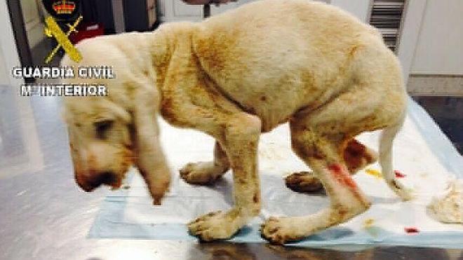 Imputan a un vecino de Palacios del Sil por maltrato a un perro que falleció