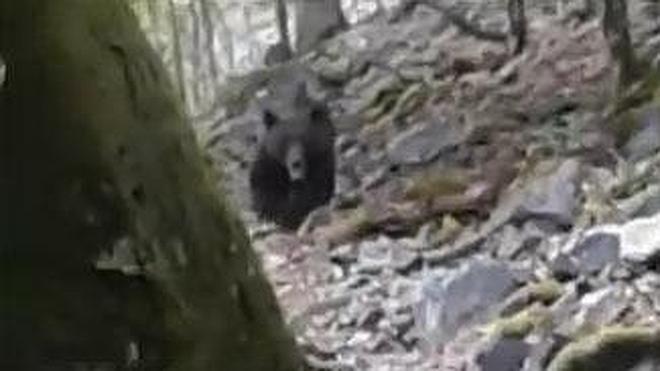 Un cazador se encuentra con un oso en la provincia de León