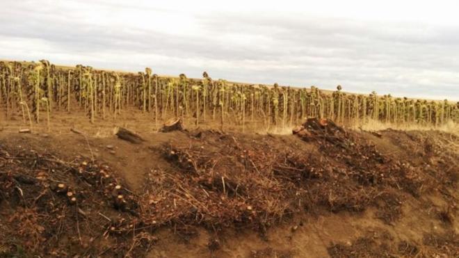 El PSOE pregunta la razón de la tala de árboles en carreteras de Frechilla, Guaza, Cisneros y Grijota