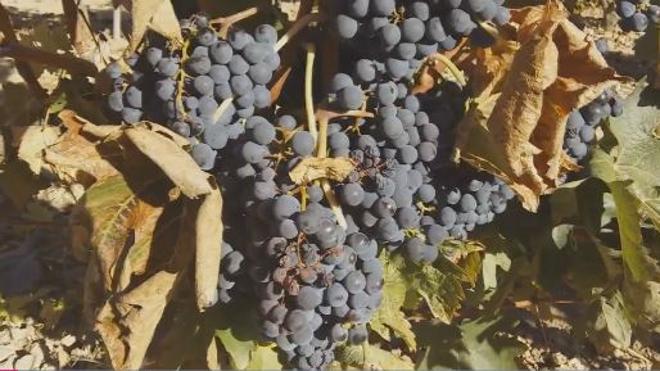 Uvas de hoy, vinos de Navidad de 2018