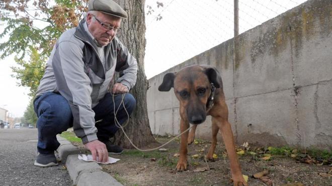 Los policías medinenses patrullarán de paisano para cazar a propietarios de perros que no recojan excrementos