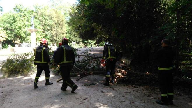 Incendios, rescates, árboles caídos y accidentes ponen a prueba a los Bomberos