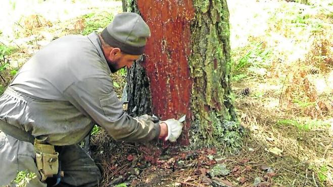 Adecocir propone un taller forestal para una parte de Las Batuecas